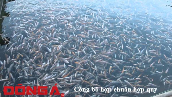 Công bố hợp quy giống thủy sản